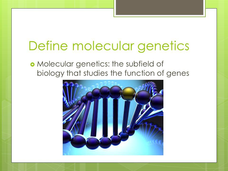 Define molecular genetics  Molecular genetics: the subfield of biology that studies the function of genes