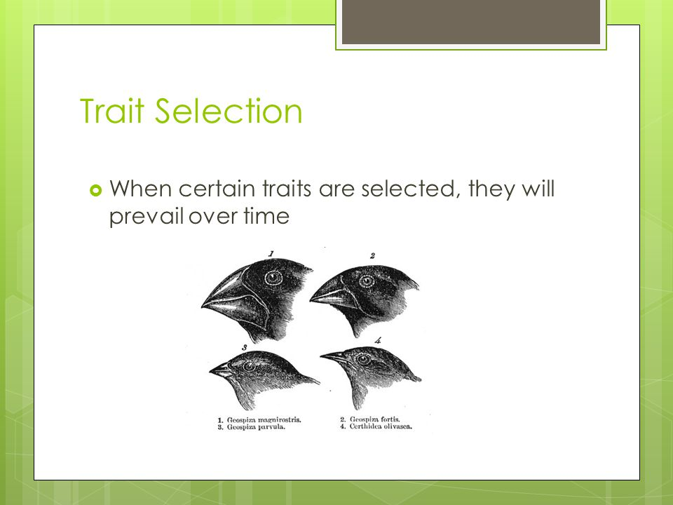 Trait Selection  When certain traits are selected, they will prevail over time