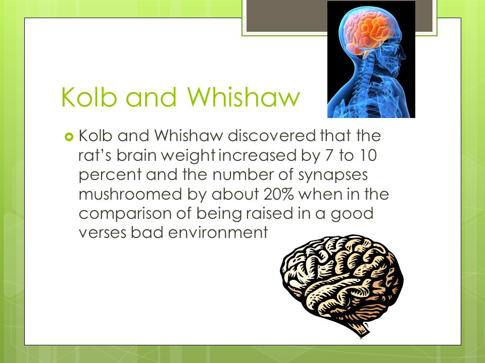 Kolb and Whishaw  Kolb and Whishaw discovered that the rat's brain weight increased by 7 to 10 percent and the number of synapses mushroomed by about