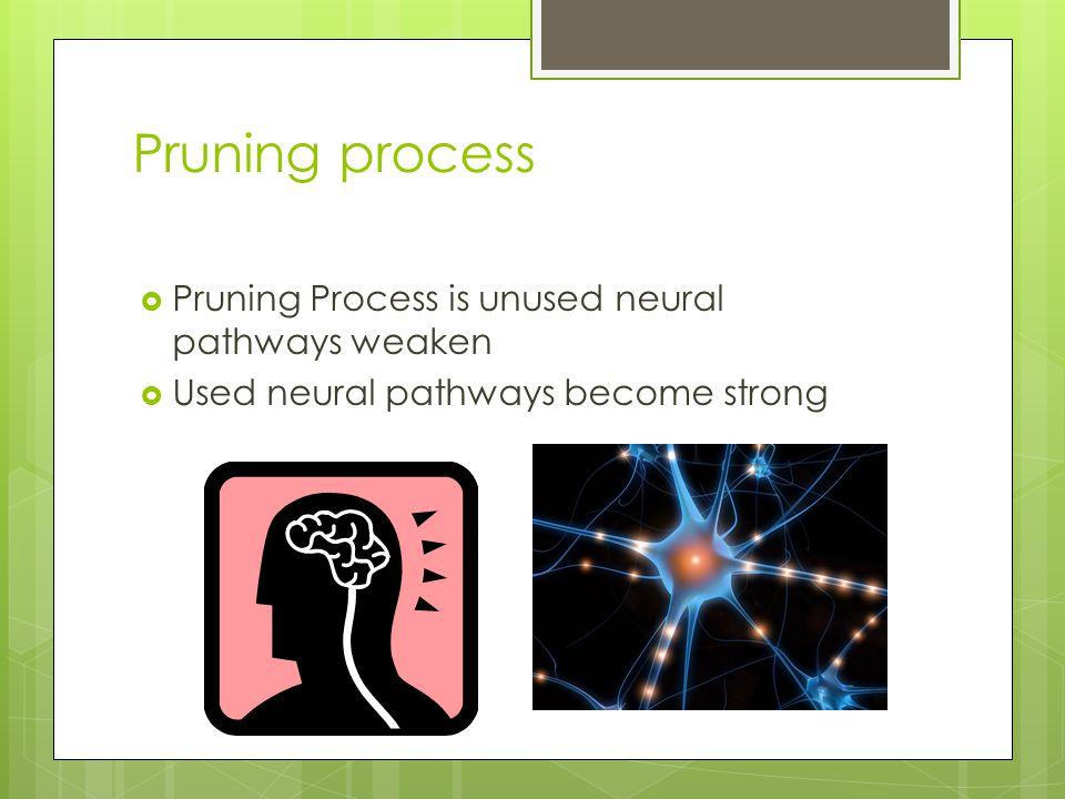 Pruning process  Pruning Process is unused neural pathways weaken  Used neural pathways become strong