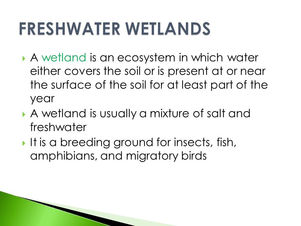  A wetland is an ecosystem in which water either covers the soil or is present at or near the surface of the soil for at least part of the year  A w