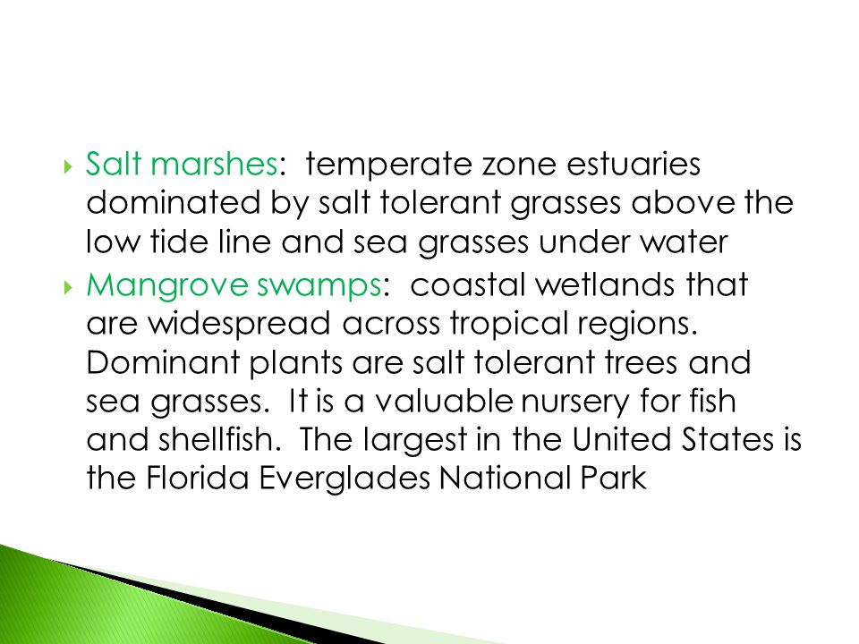  Salt marshes: temperate zone estuaries dominated by salt tolerant grasses above the low tide line and sea grasses under water  Mangrove swamps: coa