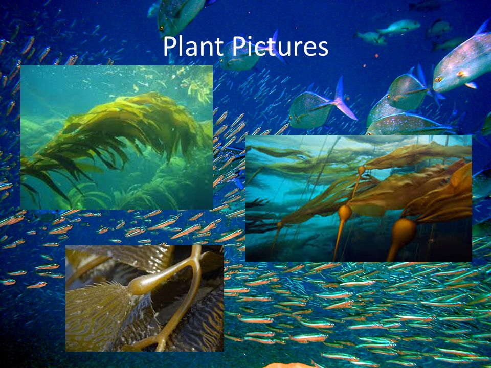 Plant Pictures