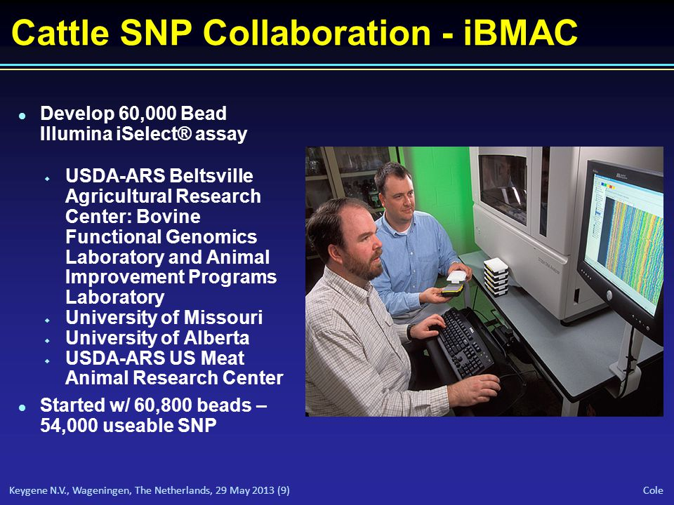 Keygene N.V., Wageningen, The Netherlands, 29 May 2013 (9) Cole Cattle SNP Collaboration - iBMAC l Develop 60,000 Bead Illumina iSelect® assay w USDA-ARS Beltsville Agricultural Research Center: Bovine Functional Genomics Laboratory and Animal Improvement Programs Laboratory w University of Missouri w University of Alberta w USDA-ARS US Meat Animal Research Center l Started w/ 60,800 beads – 54,000 useable SNP