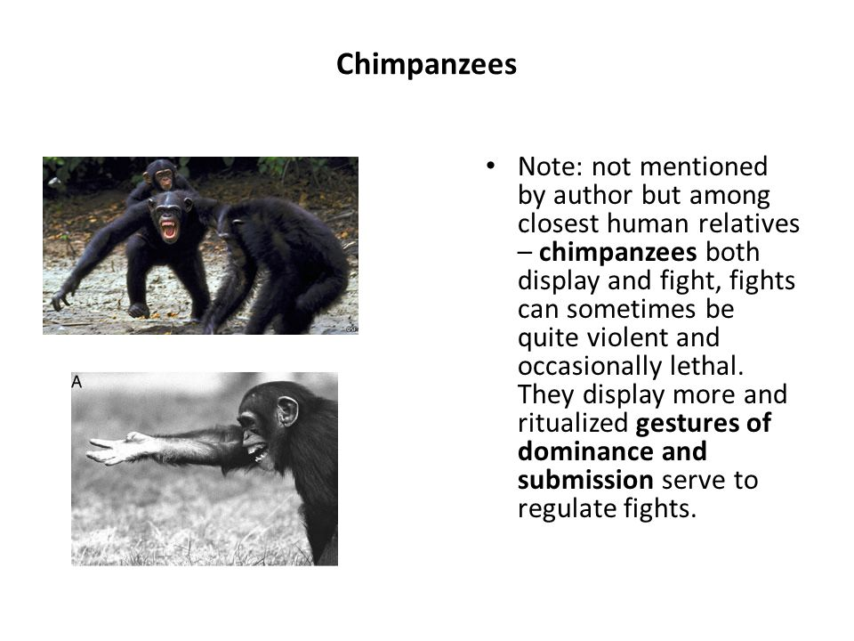 Chimpanzees Note: not mentioned by author but among closest human relatives – chimpanzees both display and fight, fights can sometimes be quite violent and occasionally lethal.