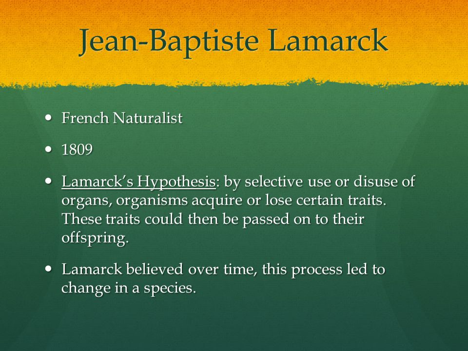 Jean-Baptiste Lamarck French Naturalist French Naturalist 1809 1809 Lamarck's Hypothesis: by selective use or disuse of organs, organisms acquire or l