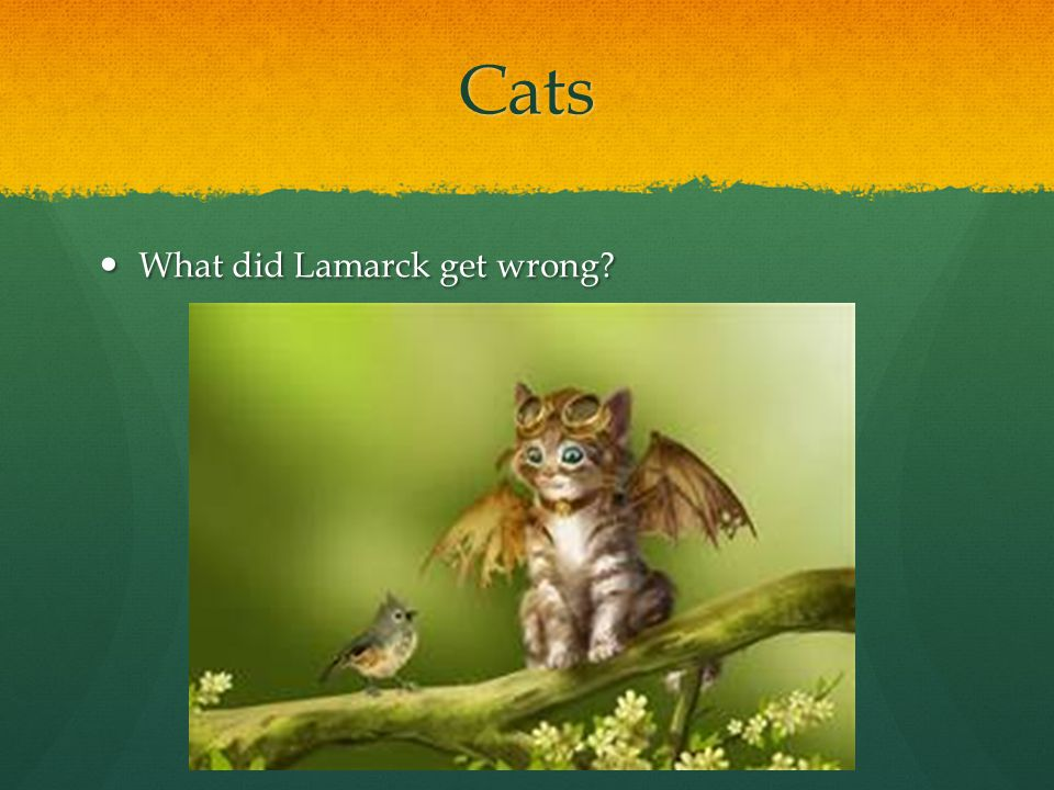 Cats What did Lamarck get wrong? What did Lamarck get wrong?