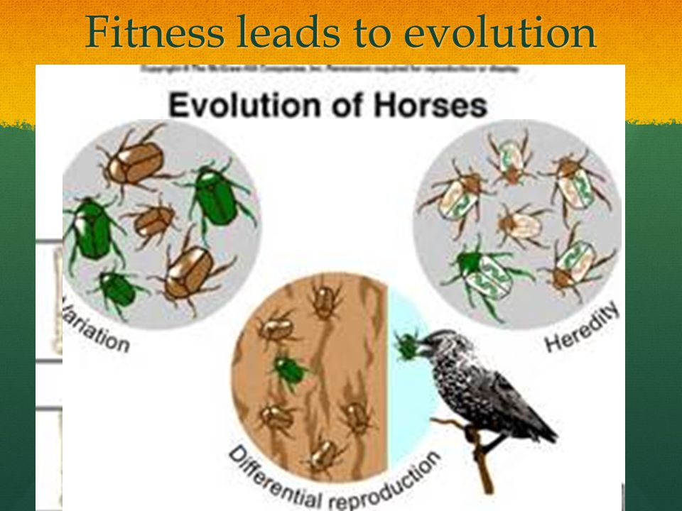 Fitness leads to evolution
