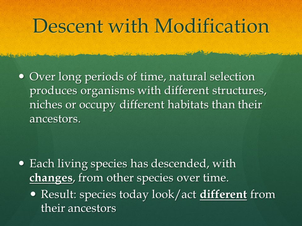 Descent with Modification Over long periods of time, natural selection produces organisms with different structures, niches or occupy different habita