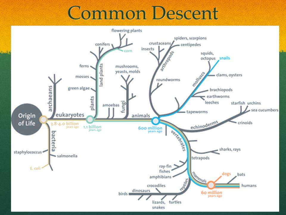 Common Descent