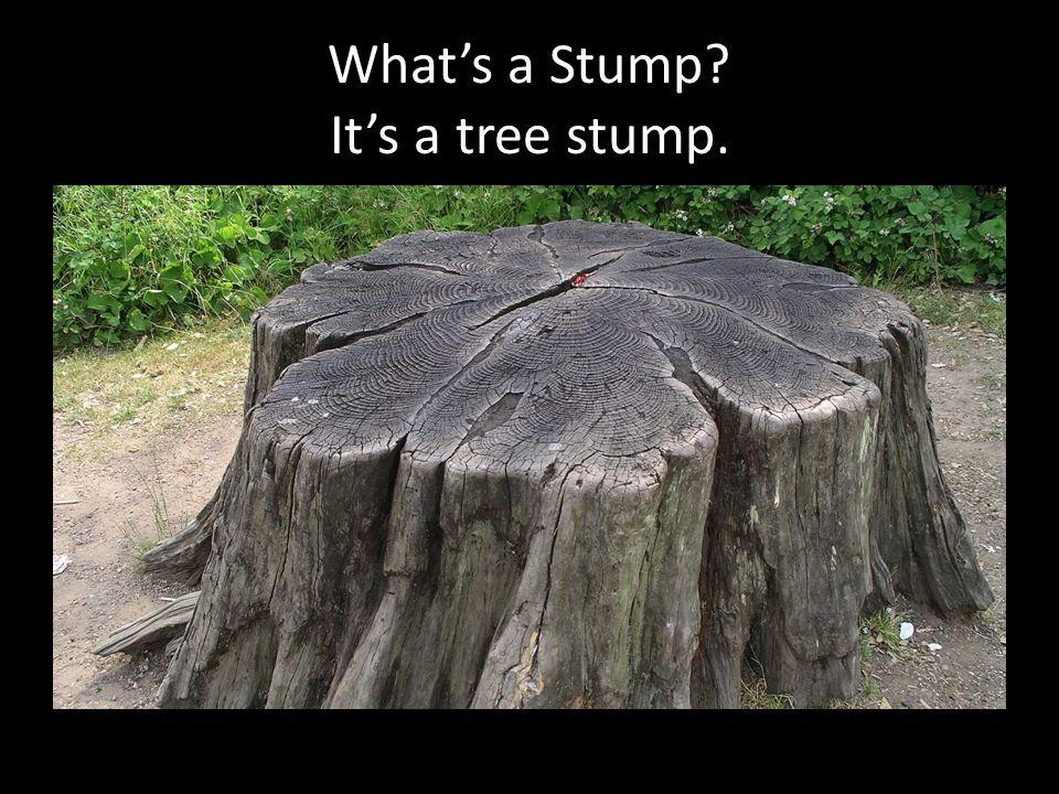 What's a Stump It's a tree stump.