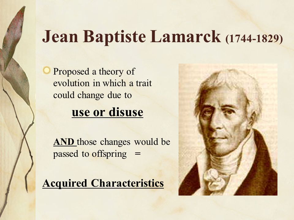 Jean Baptiste Lamarck (1744-1829) Proposed a theory of evolution in which a trait could change due to use or disuse AND those changes would be passed
