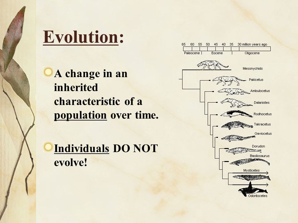 Adaptation: An Inherited trait present in a population because it helps individuals survive AND reproduce in a given environment.