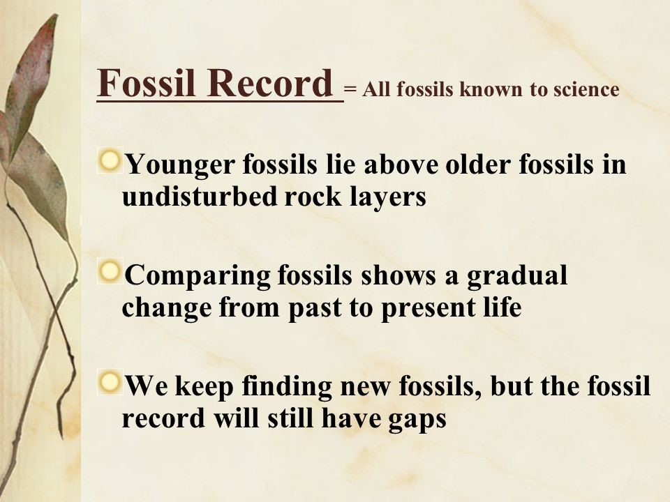 Layers of rock include fossils shows history of life over millions of years.