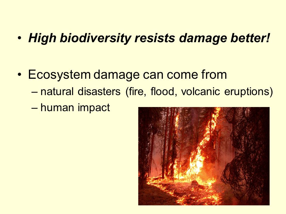 High biodiversity resists damage better! Ecosystem damage can come from –natural disasters (fire, flood, volcanic eruptions) –human impact
