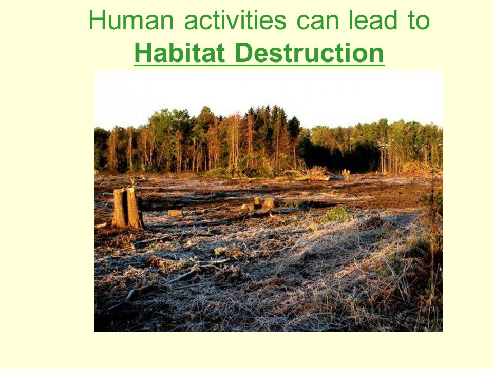 Human activities can lead to Habitat Destruction
