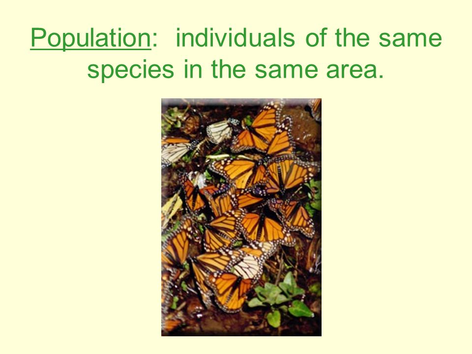 Population: individuals of the same species in the same area.