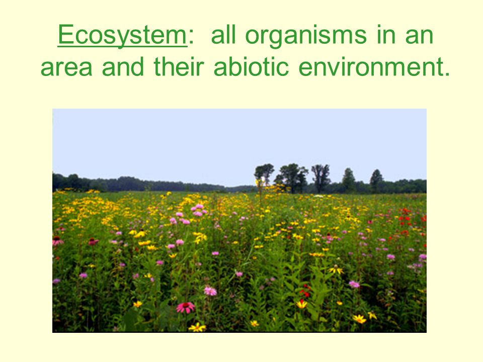 Ecosystem: all organisms in an area and their abiotic environment.
