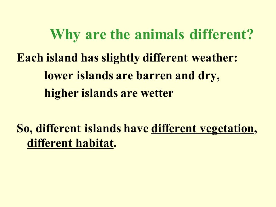 Why are the animals different? Each island has slightly different weather: lower islands are barren and dry, higher islands are wetter So, different i