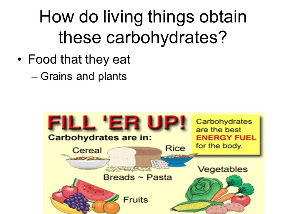 How do living things obtain these carbohydrates? Food that they eat –Grains and plants