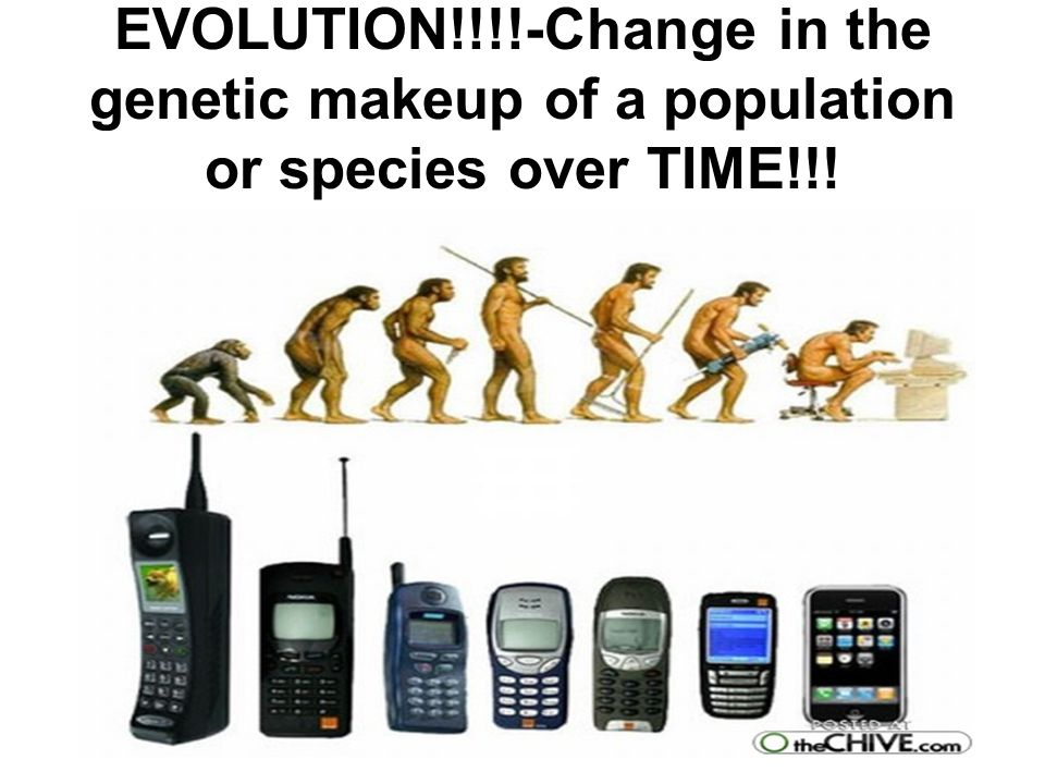 Final Question Where do you stand on the theory of evolution.
