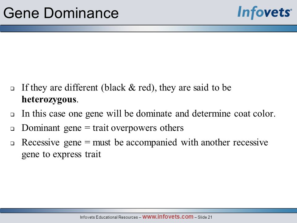 Infovets Educational Resources – www.infovets.com – Slide 21 Gene Dominance  If they are different (black & red), they are said to be heterozygous. 