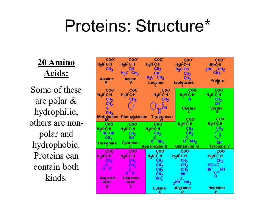 Proteins: Structure Proteins are made up of… –Monomer (basic unit): amino acids 20 different kinds!* –Polymer (chain of units): protein More specifically- polypeptides dipeptide Amino acids linked by peptide bonds