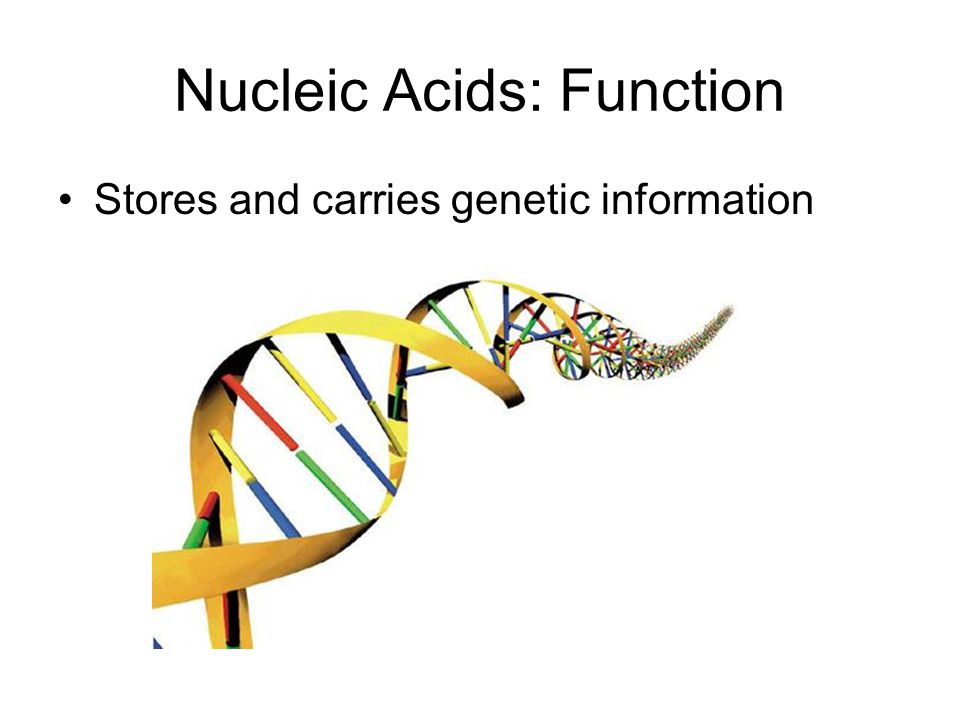 Nucleic Acids: Structure Nucleic Acids are made up of… –Monomers (basic unit): nucleotides –Polymers (chain of units): DNA or RNA