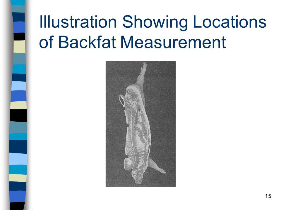 15 Illustration Showing Locations of Backfat Measurement