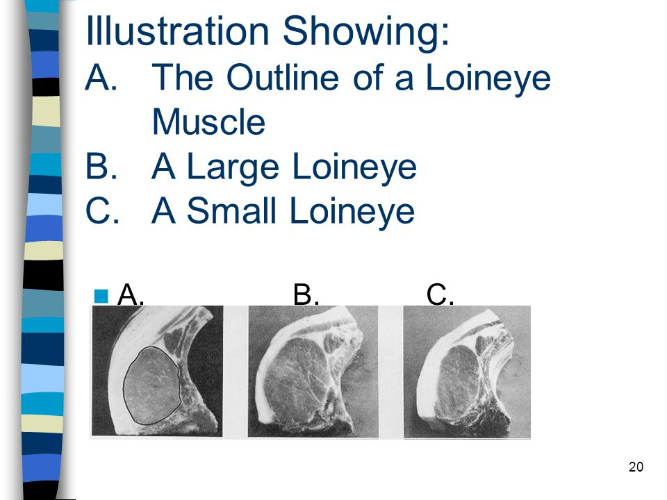 20 Illustration Showing: A. The Outline of a Loineye Muscle B. A Large Loineye C. A Small Loineye A.B.C.