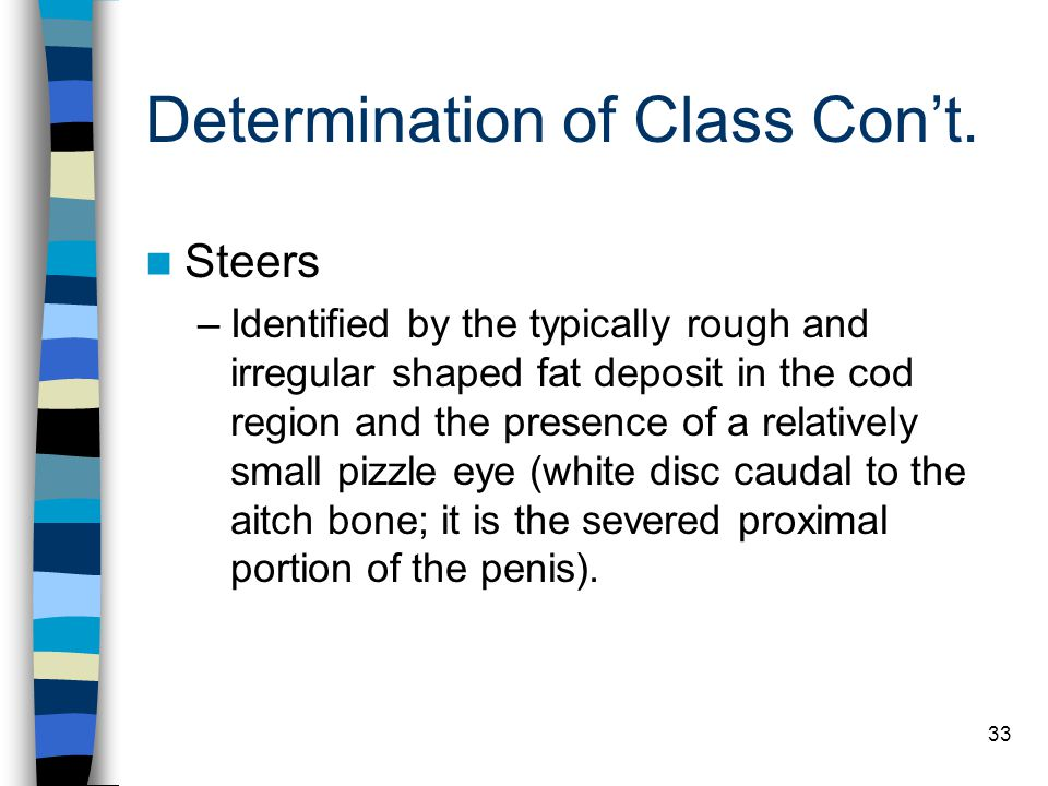 33 Determination of Class Con't. Steers –Identified by the typically rough and irregular shaped fat deposit in the cod region and the presence of a re