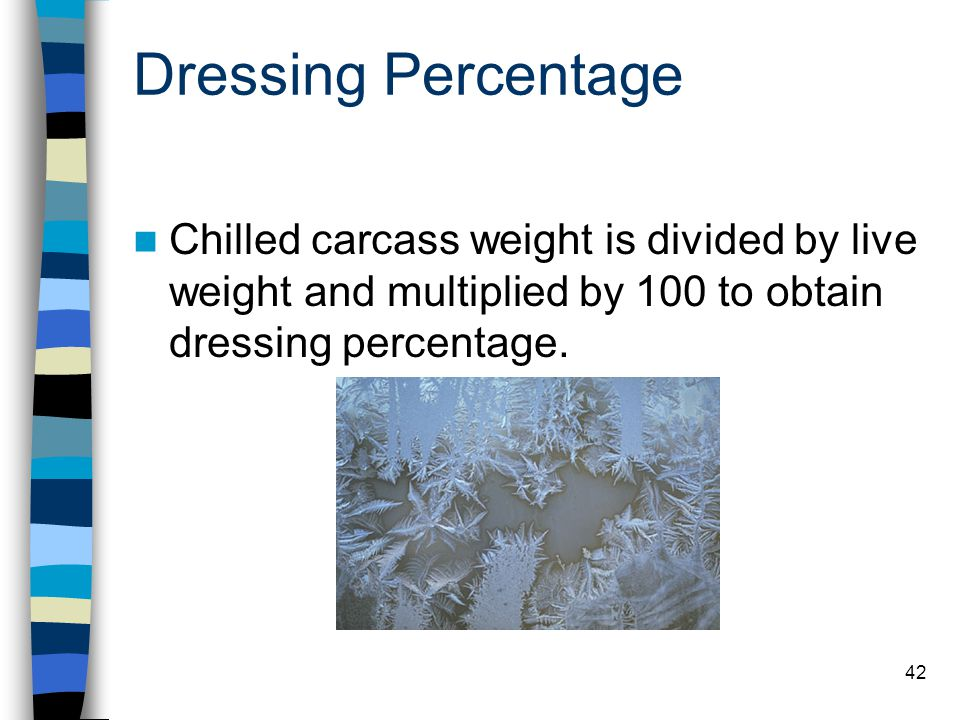 42 Dressing Percentage Chilled carcass weight is divided by live weight and multiplied by 100 to obtain dressing percentage.