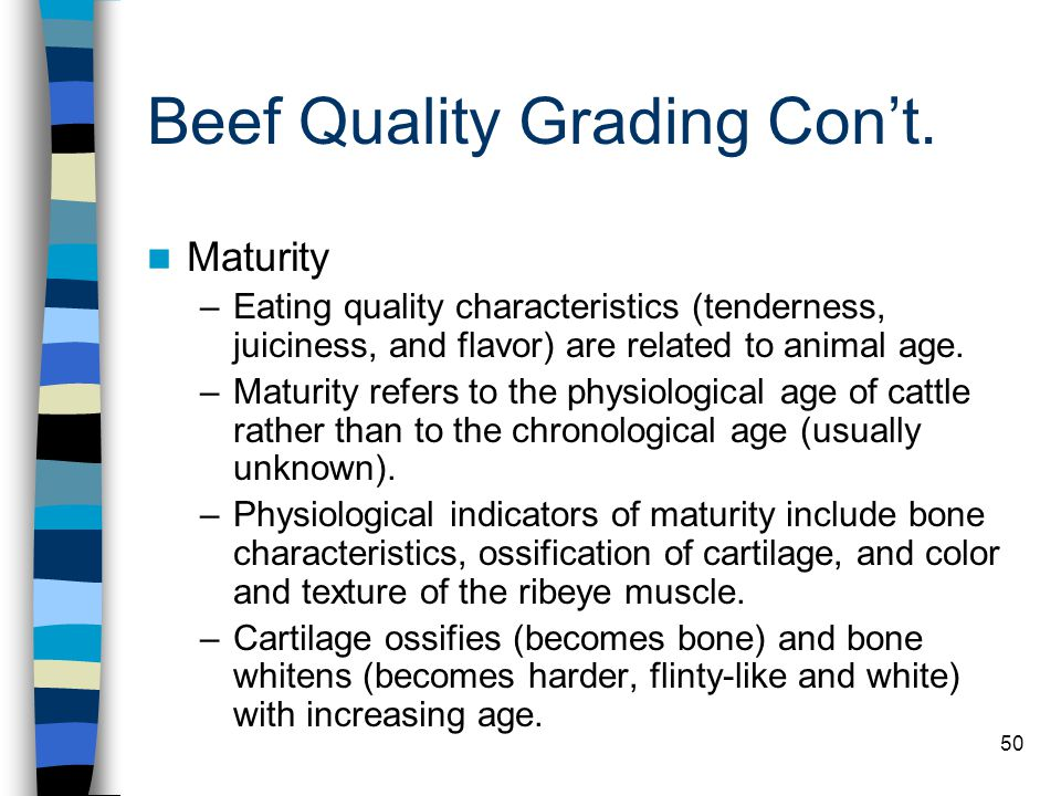 50 Beef Quality Grading Con't. Maturity –Eating quality characteristics (tenderness, juiciness, and flavor) are related to animal age. –Maturity refer