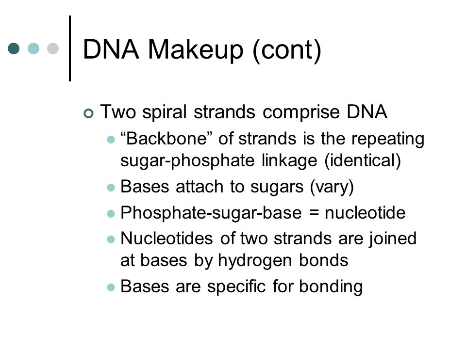 RNA Forms (cont) Ribosomal (rRNA) A chief component of Ribosomes The site of protein synthesis