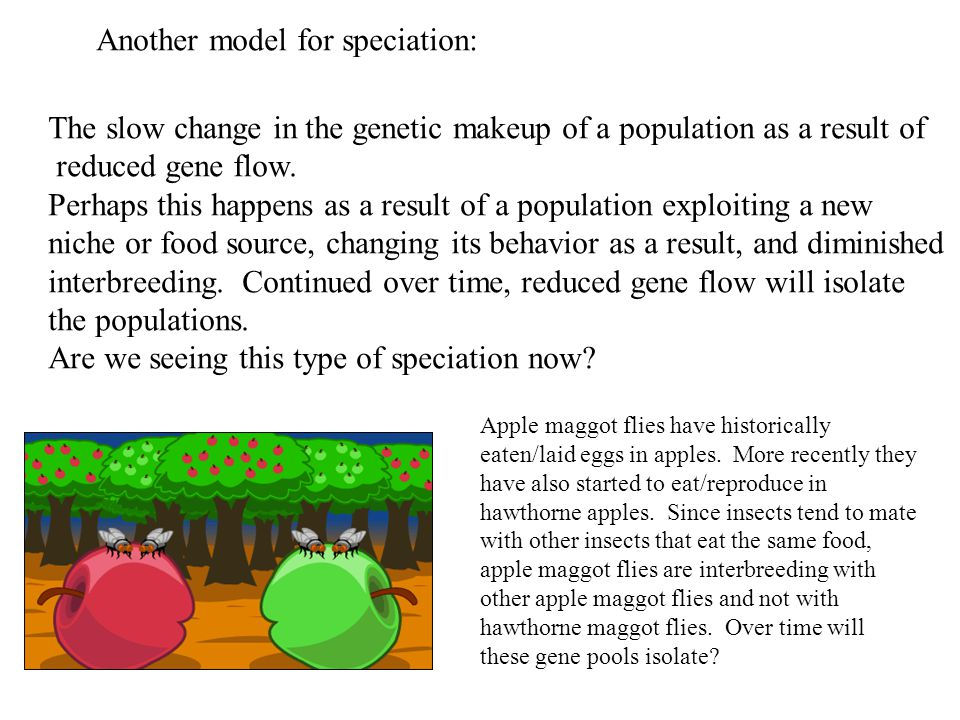 Another model for speciation: The slow change in the genetic makeup of a population as a result of reduced gene flow. Perhaps this happens as a result