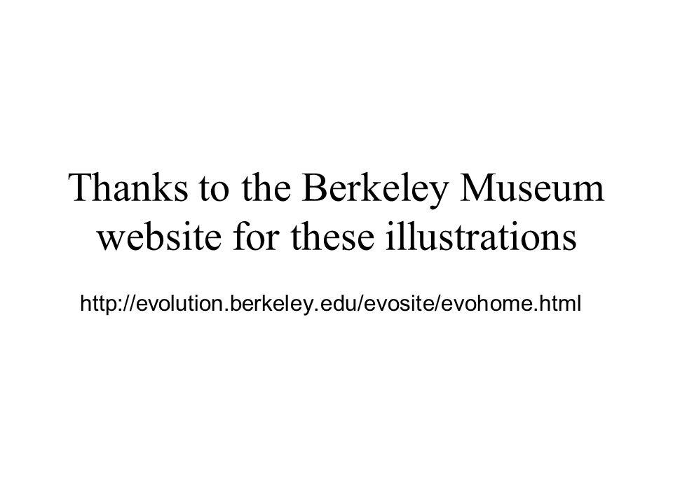 Thanks to the Berkeley Museum website for these illustrations http://evolution.berkeley.edu/evosite/evohome.html