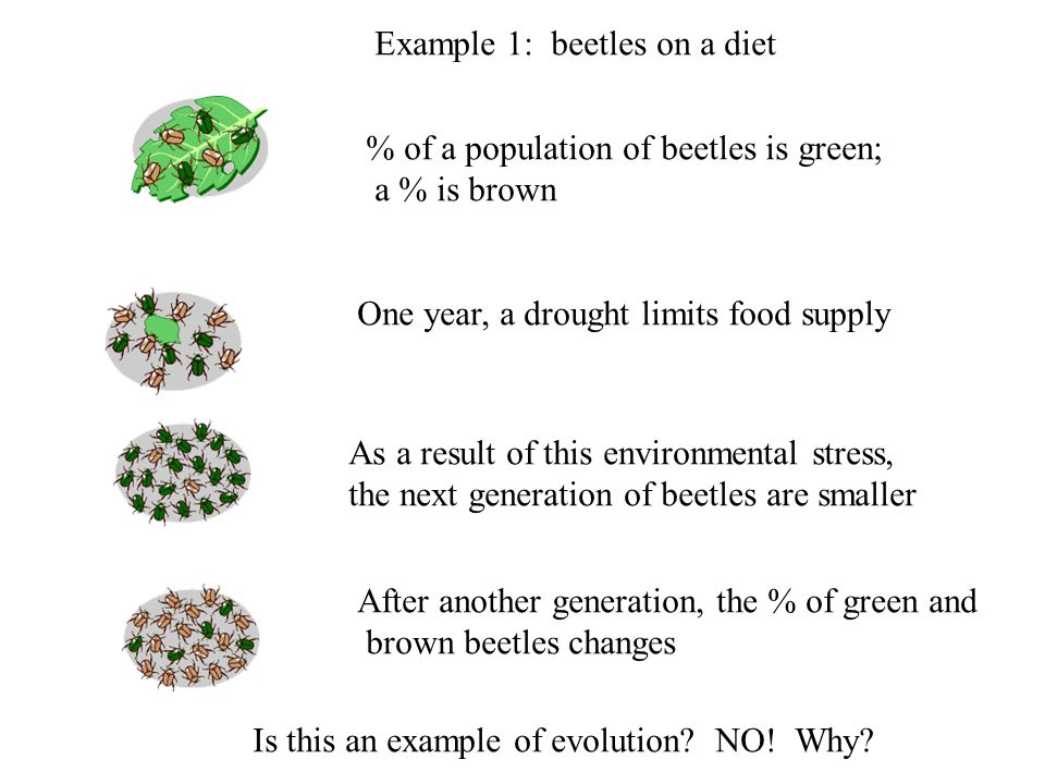 Example 1: beetles on a diet One year, a drought limits food supply % of a population of beetles is green; a % is brown As a result of this environmen