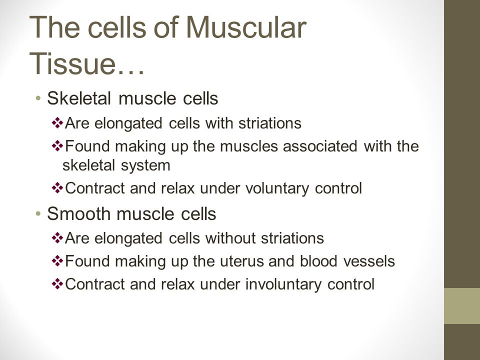 The cells of Muscular Tissue… Skeletal muscle cells  Are elongated cells with striations  Found making up the muscles associated with the skeletal system  Contract and relax under voluntary control Smooth muscle cells  Are elongated cells without striations  Found making up the uterus and blood vessels  Contract and relax under involuntary control