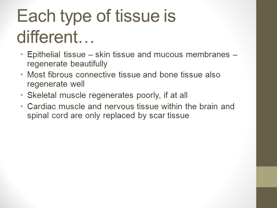 Each type of tissue is different… Epithelial tissue – skin tissue and mucous membranes – regenerate beautifully Most fibrous connective tissue and bone tissue also regenerate well Skeletal muscle regenerates poorly, if at all Cardiac muscle and nervous tissue within the brain and spinal cord are only replaced by scar tissue