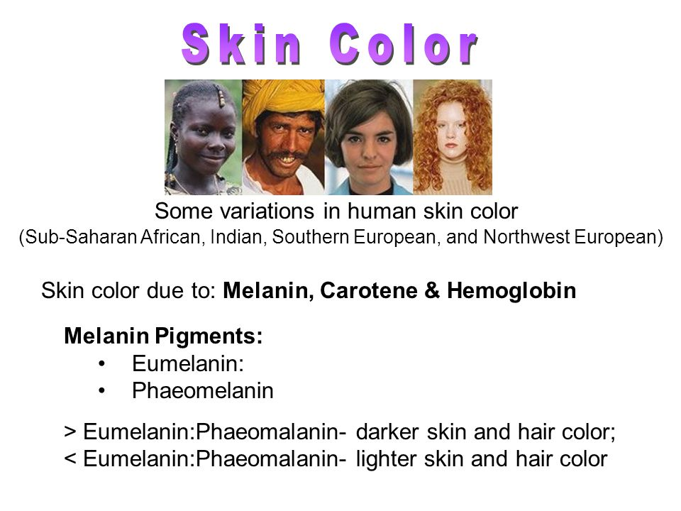 Some variations in human skin color (Sub-Saharan African, Indian, Southern European, and Northwest European) Melanin Pigments: Eumelanin: Phaeomelanin > Eumelanin:Phaeomalanin- darker skin and hair color; < Eumelanin:Phaeomalanin- lighter skin and hair color Skin color due to: Melanin, Carotene & Hemoglobin
