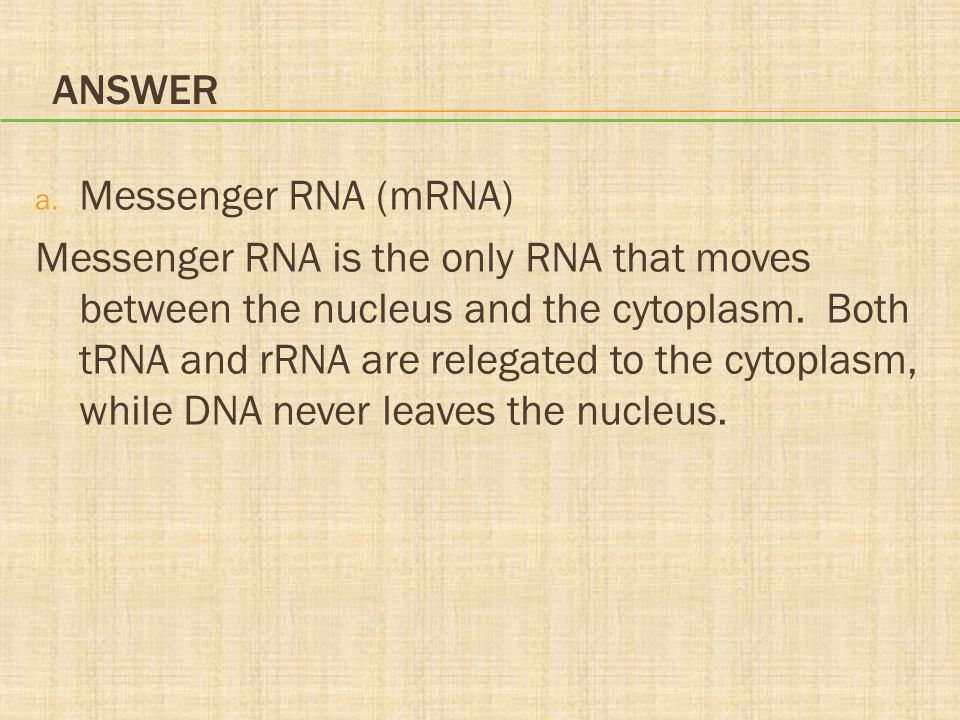 ANSWER a. Messenger RNA (mRNA) Messenger RNA is the only RNA that moves between the nucleus and the cytoplasm. Both tRNA and rRNA are relegated to the