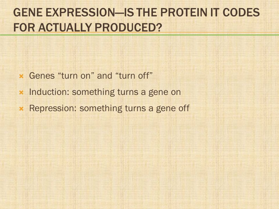 """GENE EXPRESSION—IS THE PROTEIN IT CODES FOR ACTUALLY PRODUCED?  Genes """"turn on"""" and """"turn off""""  Induction: something turns a gene on  Repression: s"""