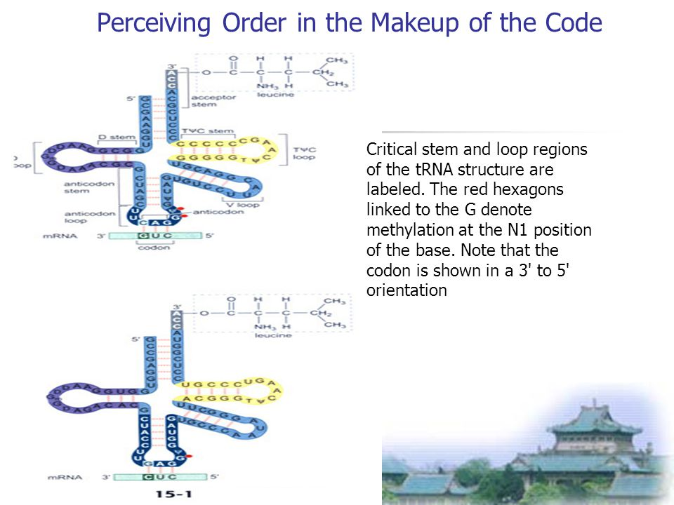 Perceiving Order in the Makeup of the Code Critical stem and loop regions of the tRNA structure are labeled.