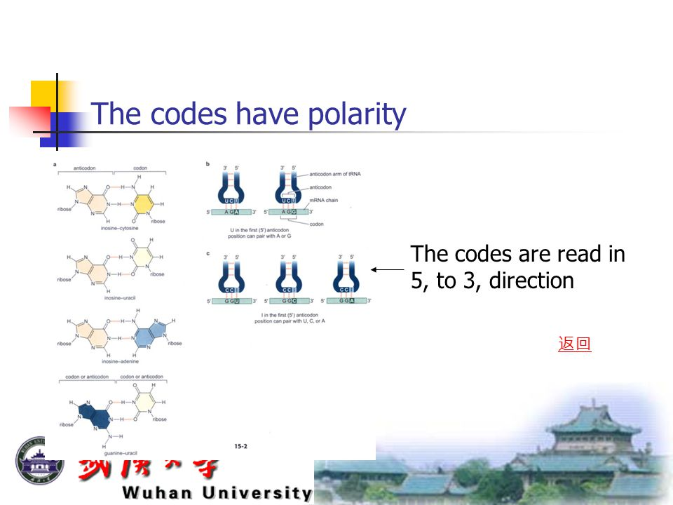The codes have polarity The codes are read in 5, to 3, direction 返回
