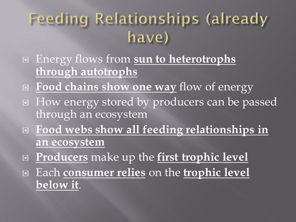  Energy flows from sun to heterotrophs through autotrophs  Food chains show one way flow of energy  How energy stored by producers can be passed through an ecosystem  Food webs show all feeding relationships in an ecosystem  Producers make up the first trophic level  Each consumer relies on the trophic level below it.