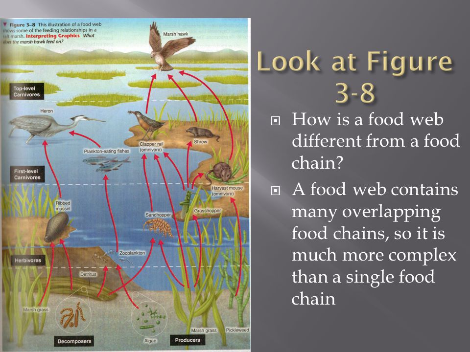  How is a food web different from a food chain.