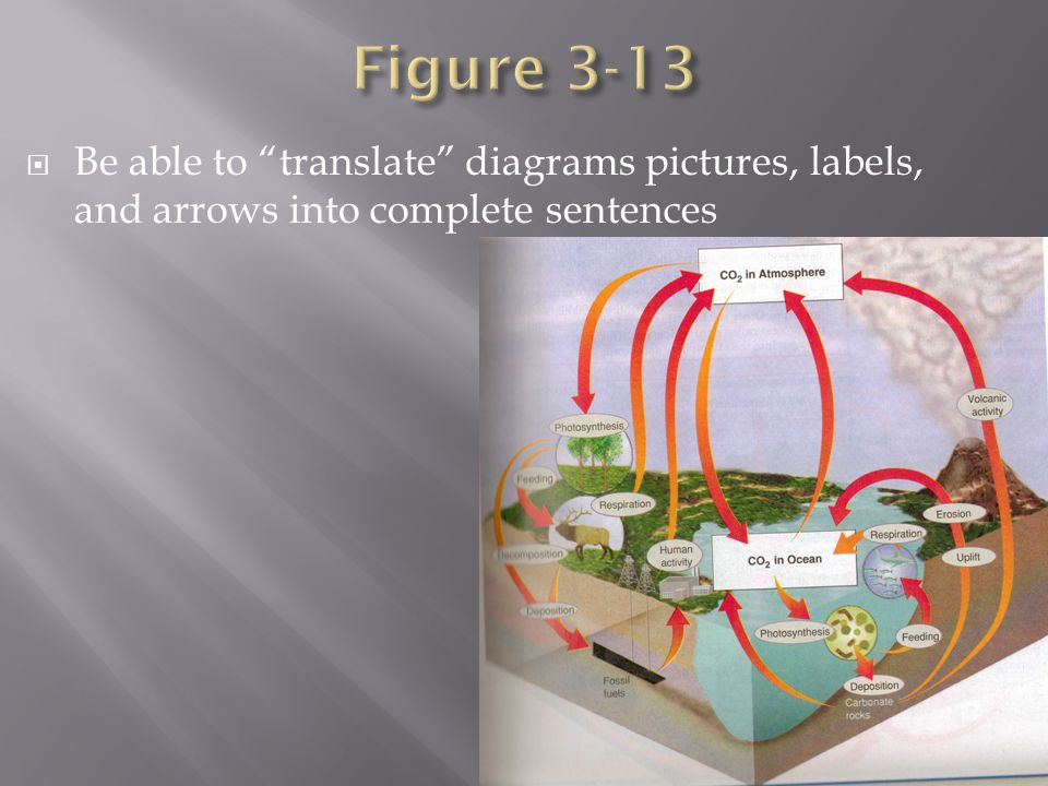  Be able to translate diagrams pictures, labels, and arrows into complete sentences