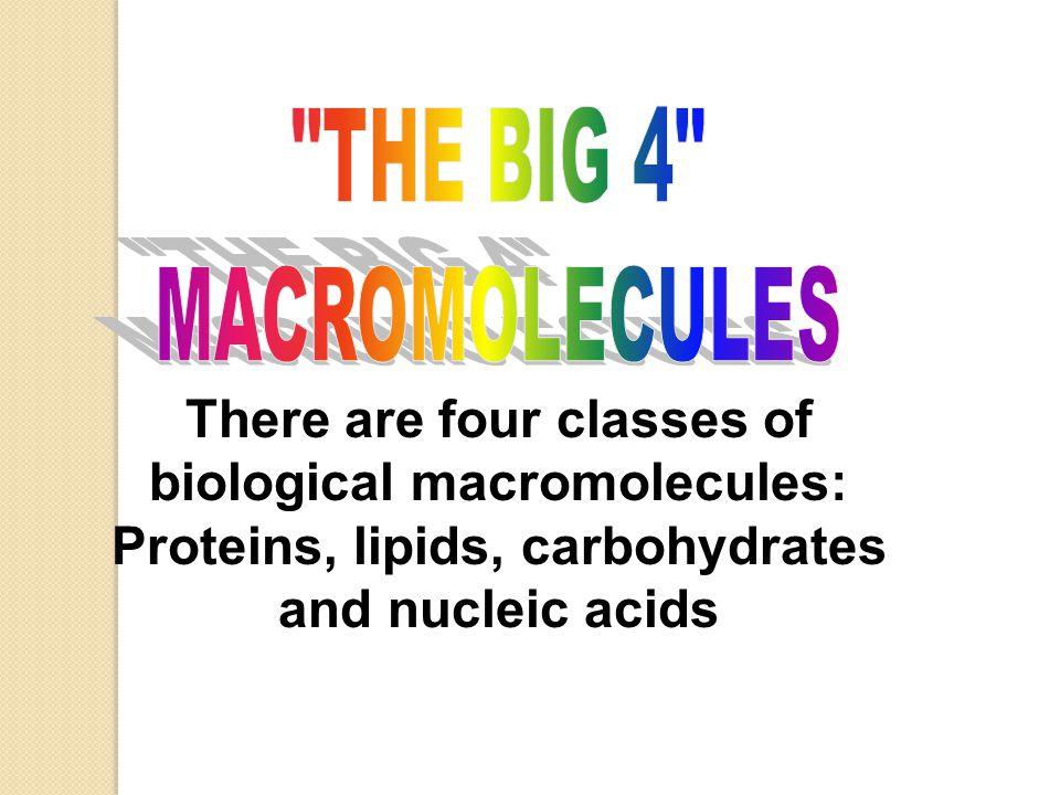 2003-2004 Lipids Examples ◦ fats ◦ oils ◦ waxes ◦ hormones  sex hormones  testosterone (male)  estrogen (female)