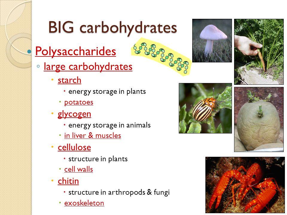 Building carbohydrates Synthesis | glucose | glucose 1 sugar = monosaccharide 2 sugars = disaccharide | maltose