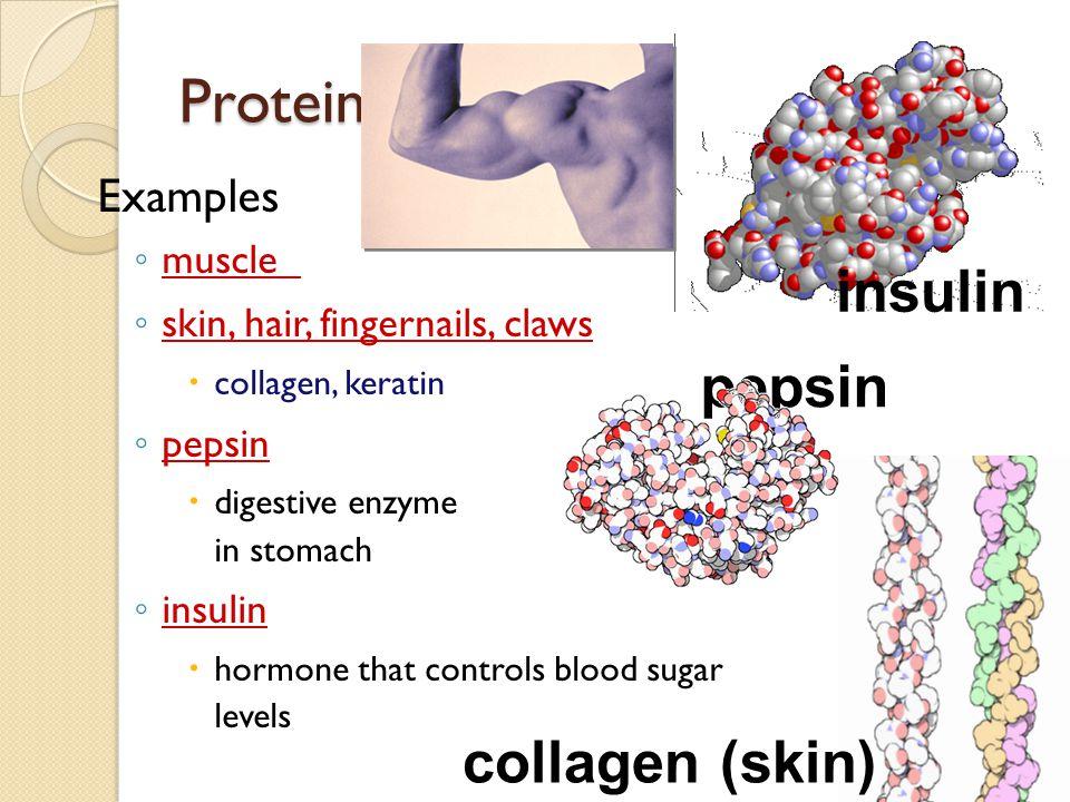 Proteins: Multipurpose molecules